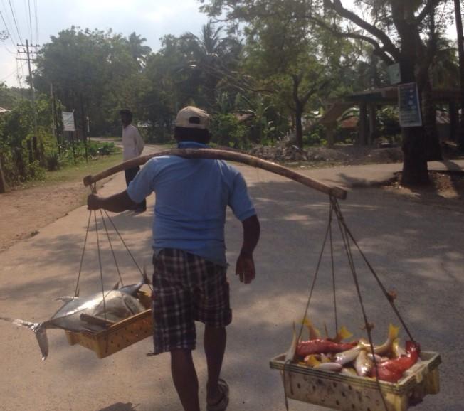 fishmonger neil island andaman nicobar